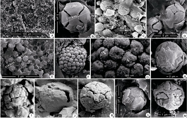 Nano-scale spheroids found in the black shales of the Ediacaran Doushantuo Formation in the Jijiawan section, Hubei, China.A–E, I, L, M Soccer ball-like spheroids with probable hollow interior and polygonal cracks, preserved in situ (except specimen M, which was obtained by acid maceration); specimen I displays tuberculiform ornamentation on its surface. F, G colony-like spheroids, which were obtained from organic residues of acid maceration and are compared with known fossils — Bavlinella faveolata. G is a magnification of part of F to show ductile walls (arrow) and possible fine ornamentation on the surface. H, J, K single spheroids with hollow cavities, H was obtained from organic residues of acid maceration, J and K are preserved in situ.