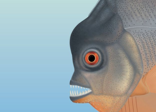 An artist's impression of the ancient piranha