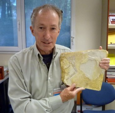 Dr. John Nudds with Archaeopteryx fossil specimen at the European Synchrotron in Grenoble. Credit: Image courtesy of The University of Manchester
