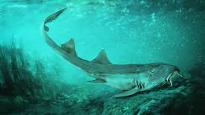 Researchers hypothesize that the prehistoric shark Galagadon nordquistae was a bottom–dweller with barbels by its mouth, like a catfish, with camouflage patterning. (Velizar Simeonovski/Field Museum/Reuters)