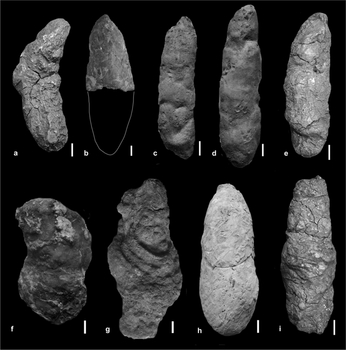 Large to medium-sized, elongated, bone-bearing and phosphate-rich S. wawelski coprolites from Lisowice, Upper Triassic, Poland. (a) ZPAL V.33/344. (b) ZPAL V.33/342. (c) ZPAL V.33/346. (d) ZPAL V.33/604. (e) ZPAL V.33/345. (f) ZPAL V.33/600. (g) ZPAL V.33/343. (h) ZPAL V.33/340. (i) ZPAL V.33/341. (a–e,h,i) Elongated specimens. (f,g) Elongated but slightly more irregular specimens. Scale bars: 1 cm.
