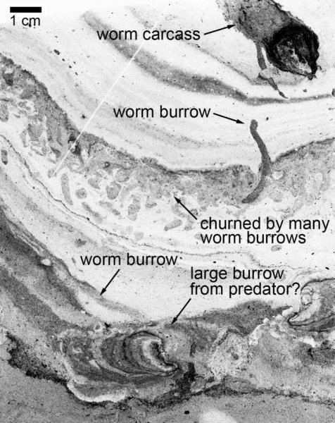 These are worm tunnels (labelled) visible in small section of rock. Credit: Professor Brian Pratt, University of Saskatchewan